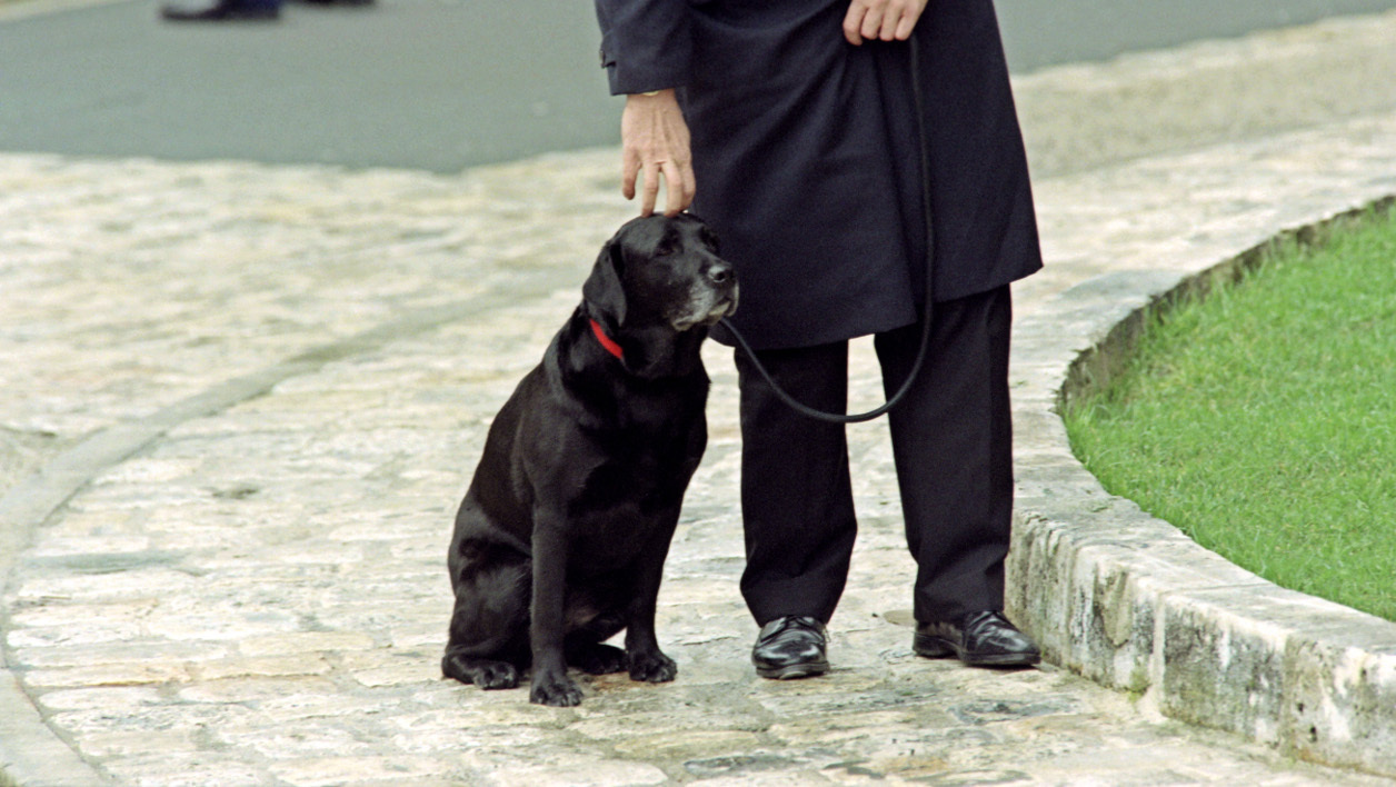 chien-Baltique-enterrement-Mitterrand