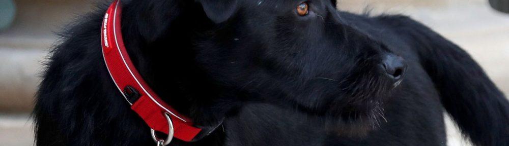 chien-memo-macron-elysée