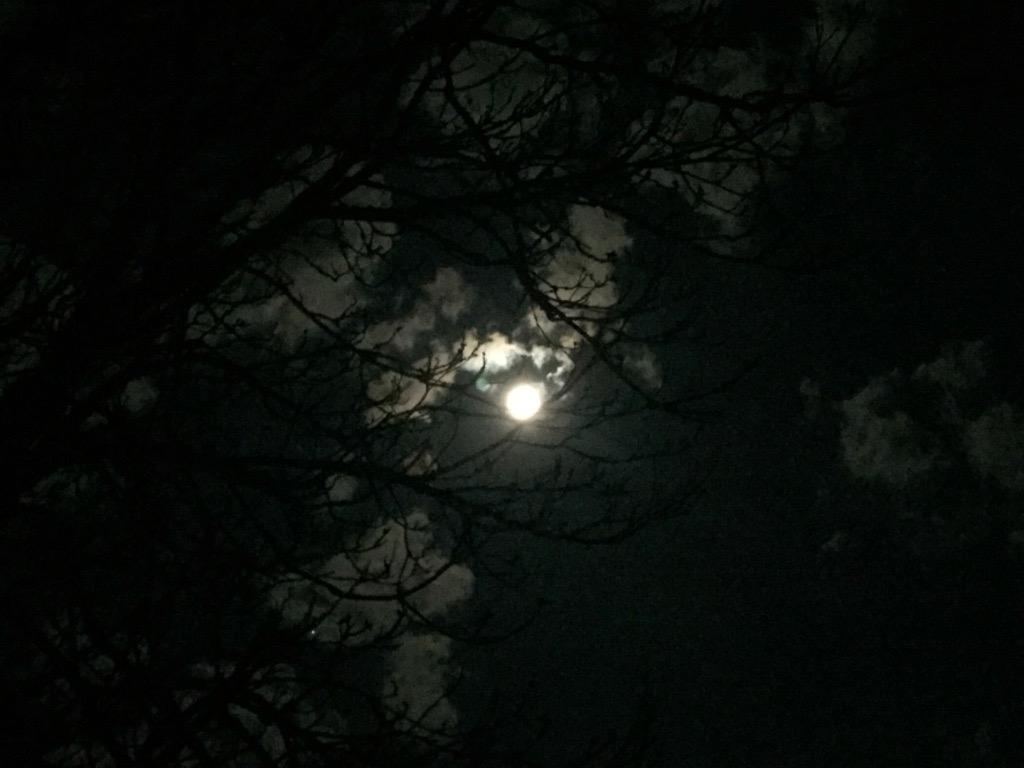Poésie-poème-Vin-nocturne
