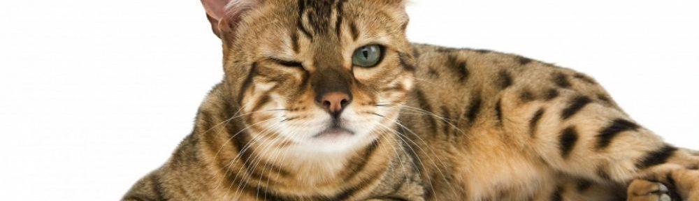 chat-symbole-21e-siecle