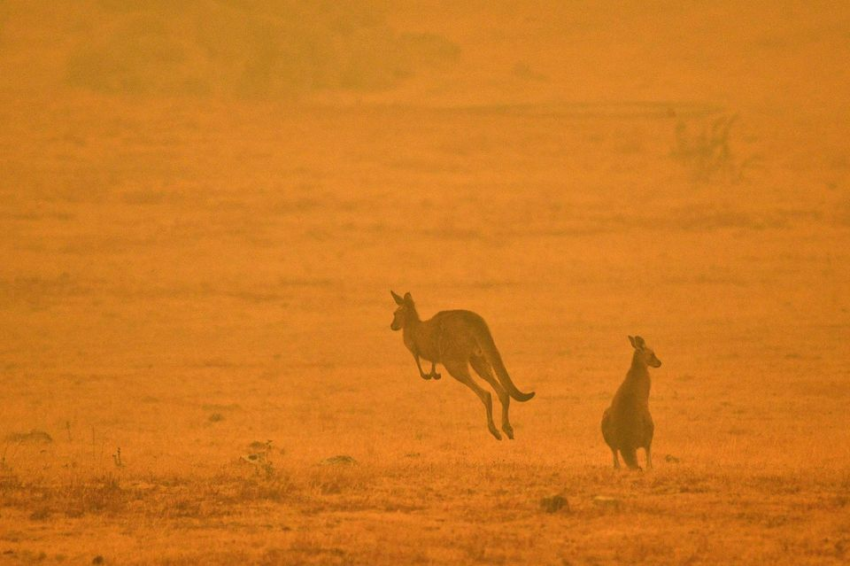 nature-écologie-incendies-Australie