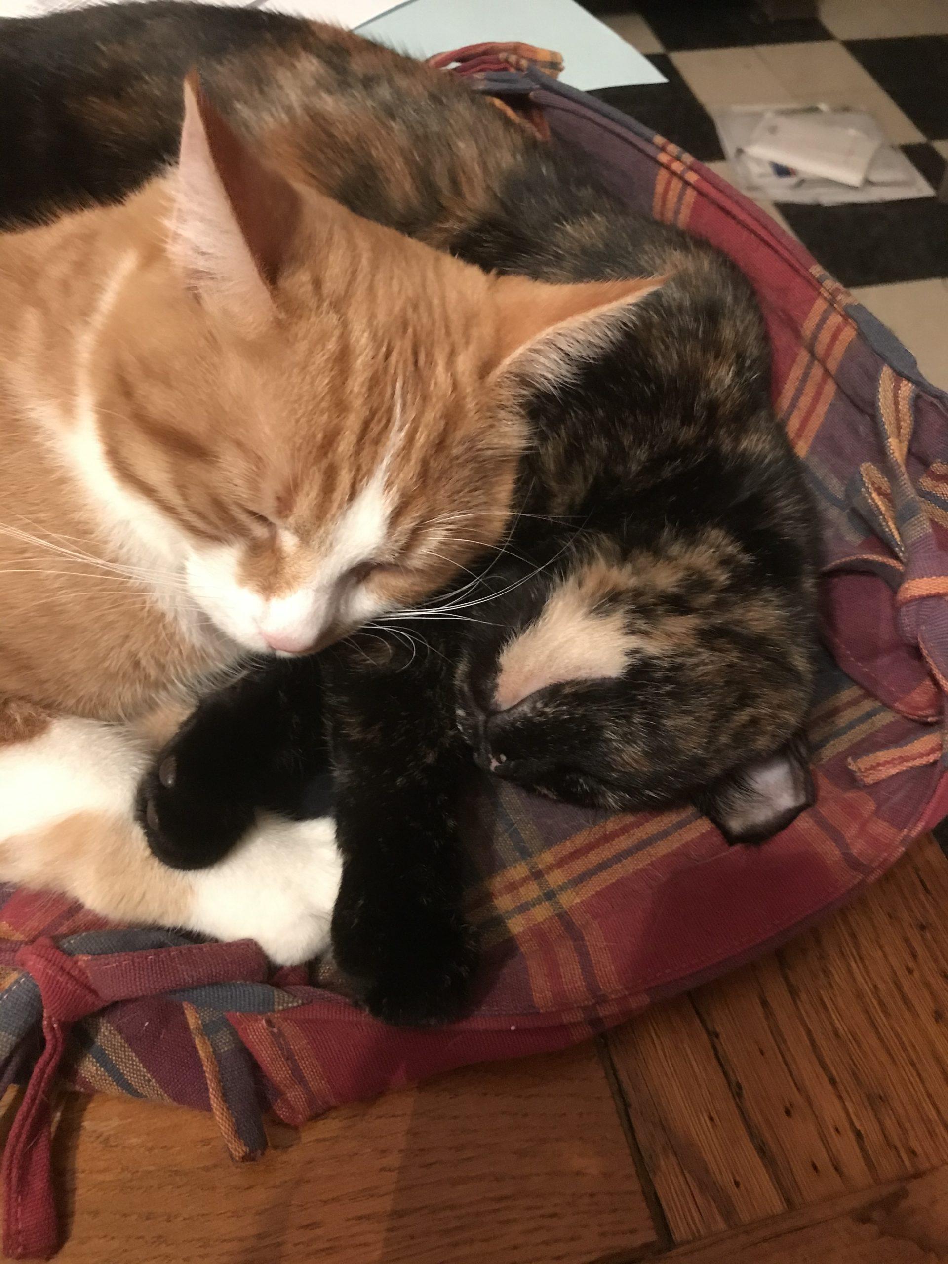 covid-19-temps-malaise-chats